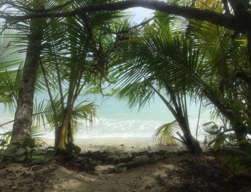 Costa Rica: i Caraibi, Puerto Viejo, Cahuita, Manzanillo e Punta Uva