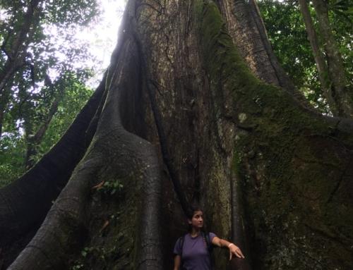 Costa Rica: La Fortuna, Vulcano Arenal e terme naturali gratuite